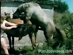 Busty wife enjoys donkey to brutally fuck her cunt with hubby ...
