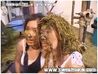 Dirty Thai sluts cover one another's face with poop of cow